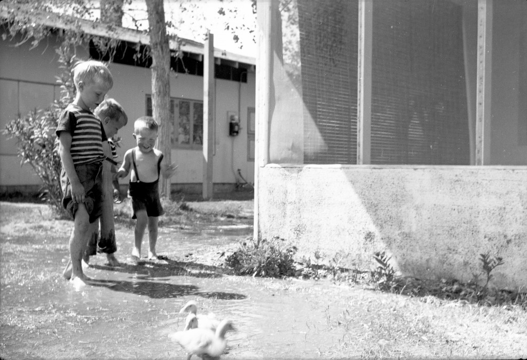 1946?- Watching the ducklings 2